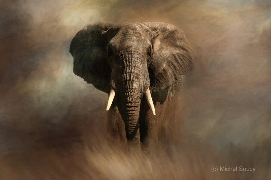 African Elephant  Print