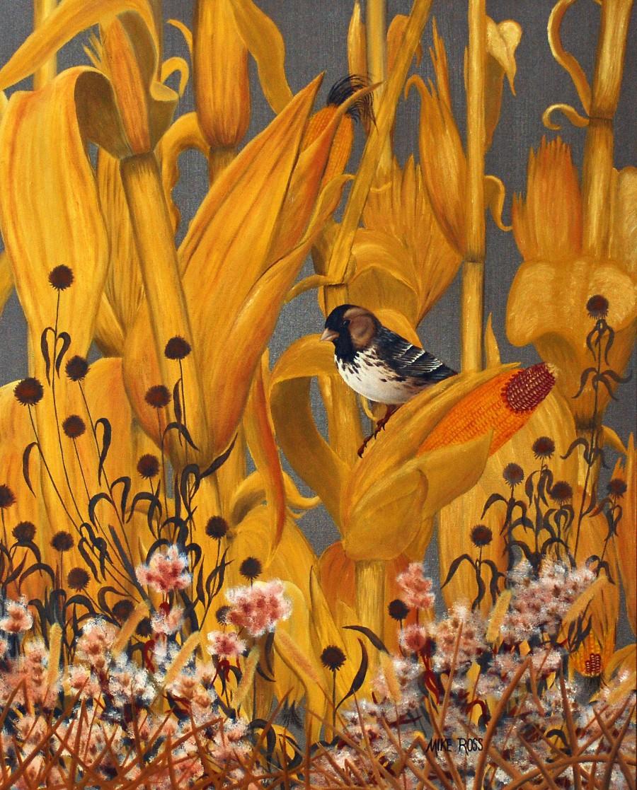 Harris Sparrow  Print