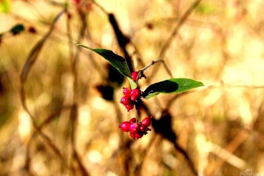 Fall Berries  Print
