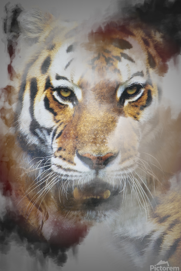 Tigre  Print