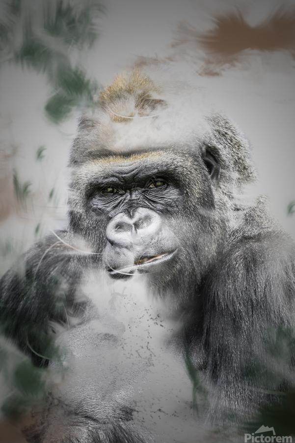 Gorille  Print