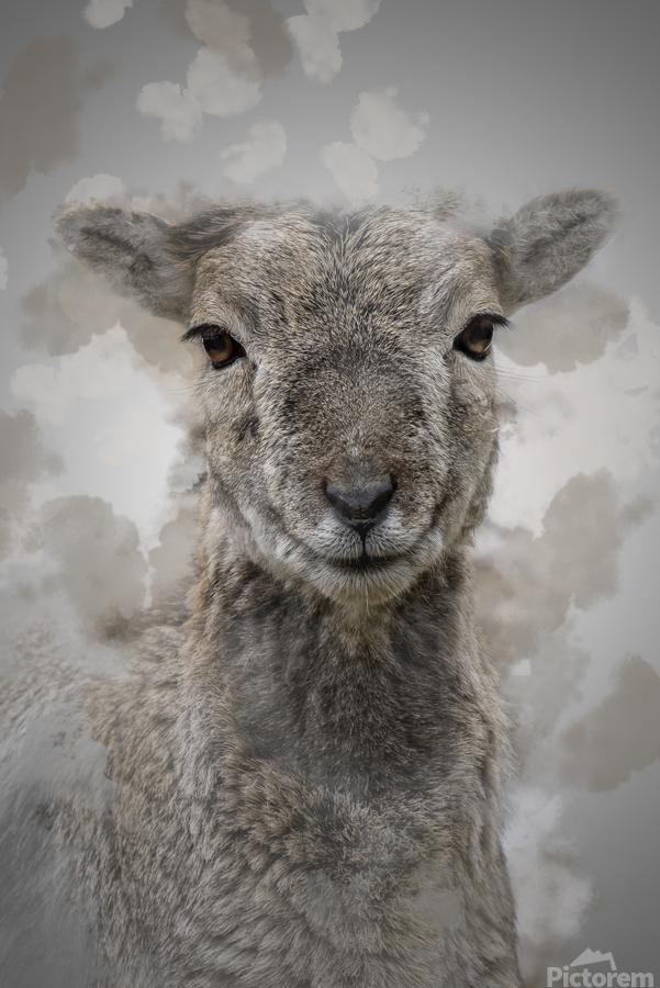 Mouflon  Print