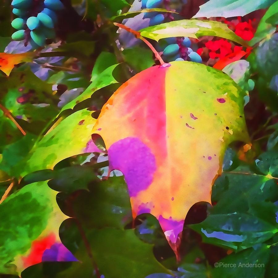 Color Burst  Print