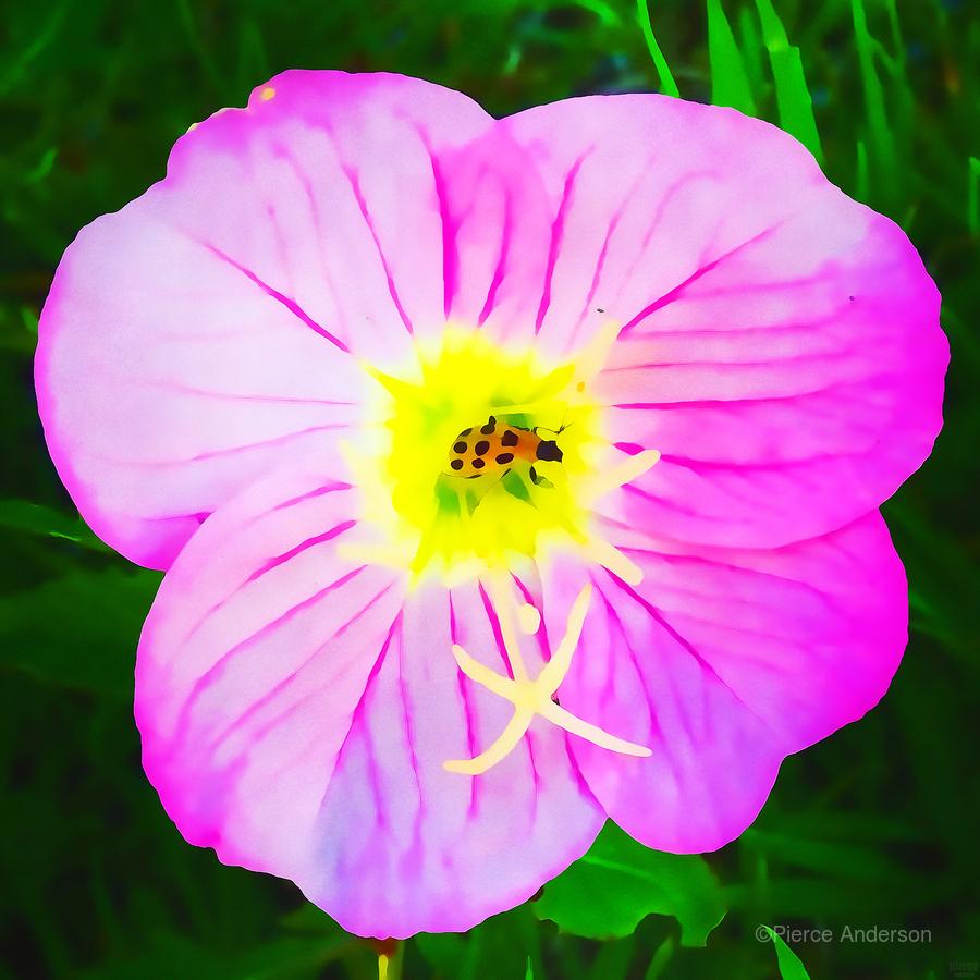 lady bug flower  Print