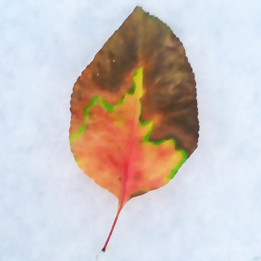 snow leaf  Print