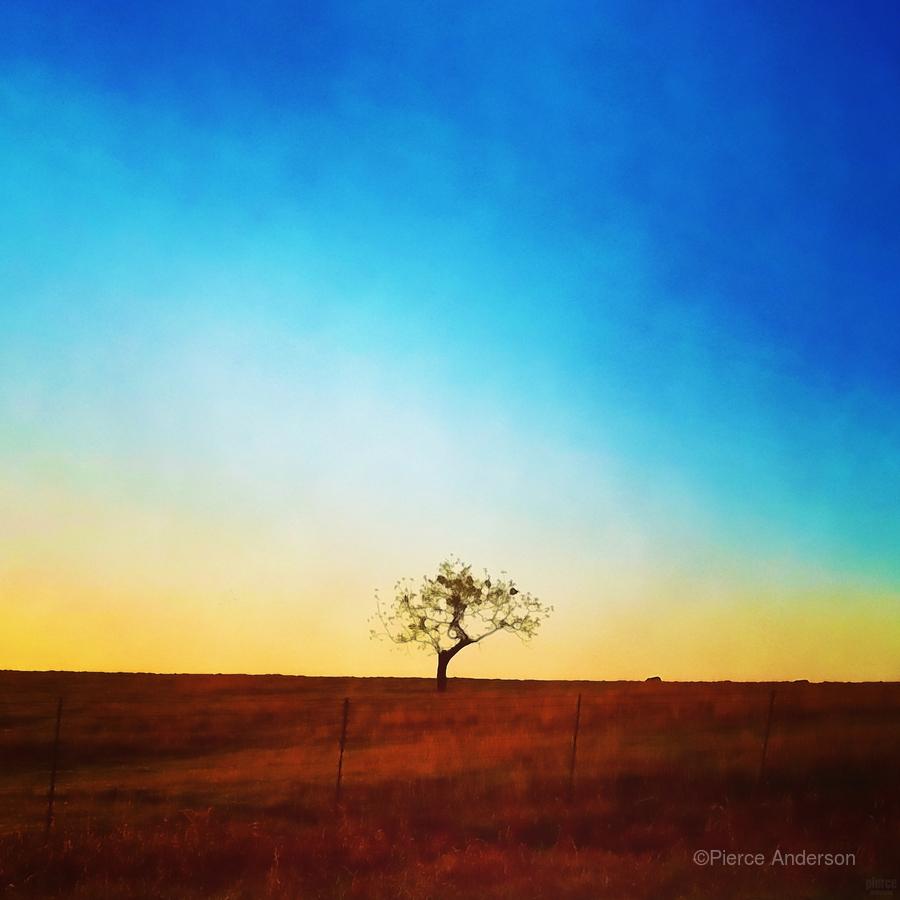 solitude tree  Print
