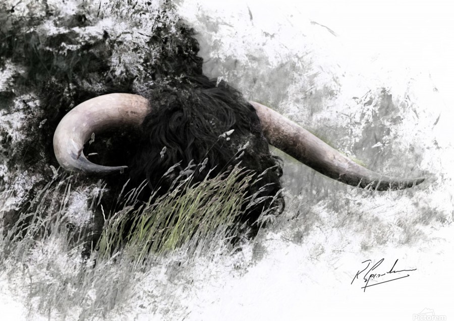 Bull in long grass  Print