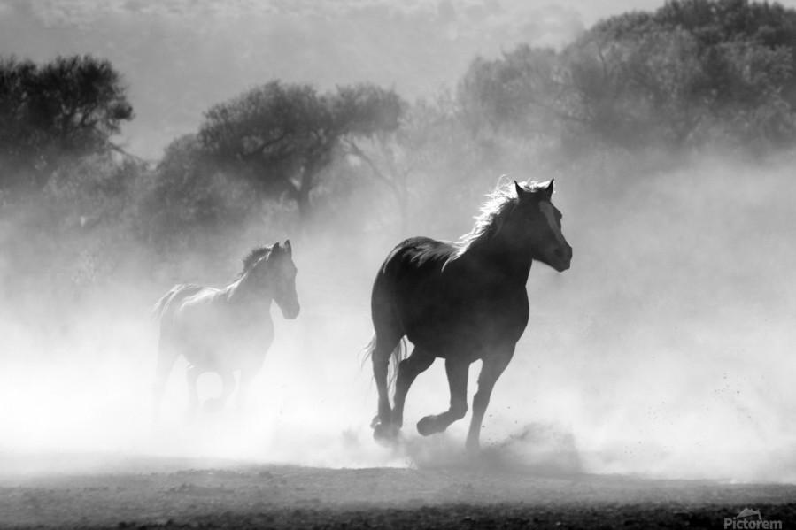 horse herd dust nature wild  Print