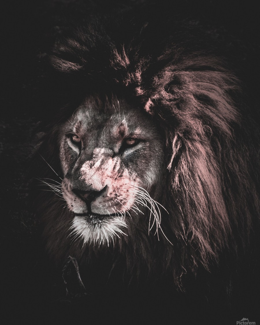 lion painting  Print