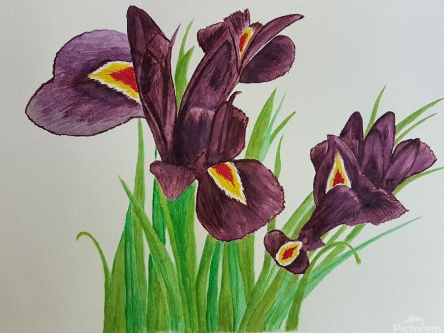 Irises  Imprimer