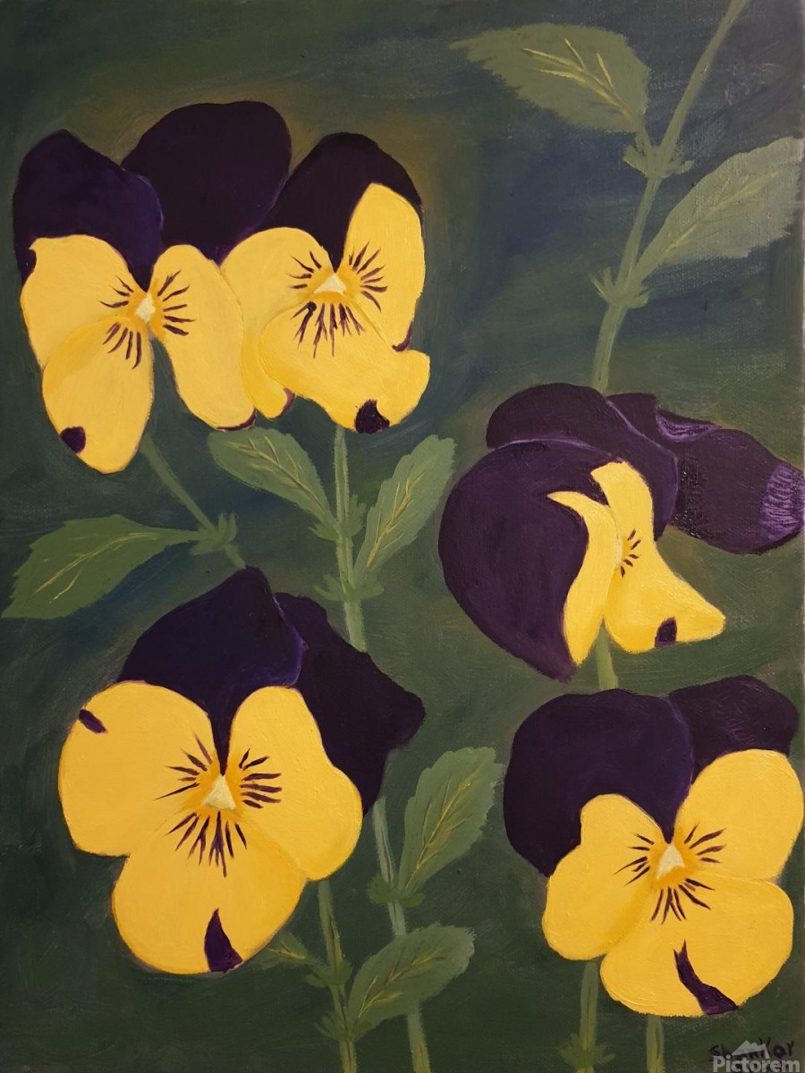 Yellow and purple pansies  Print