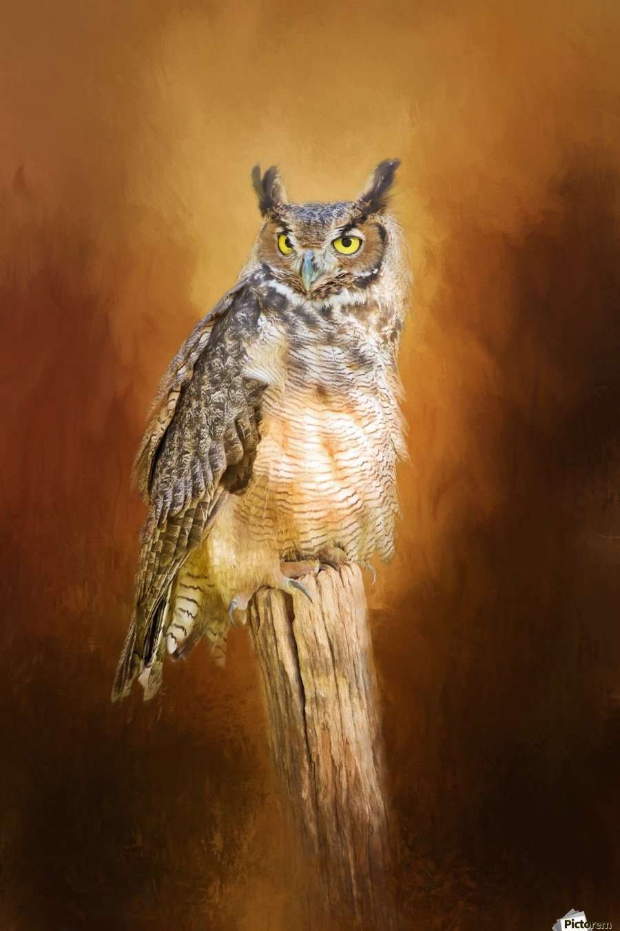 Great Horned Owl In Autumn  Print