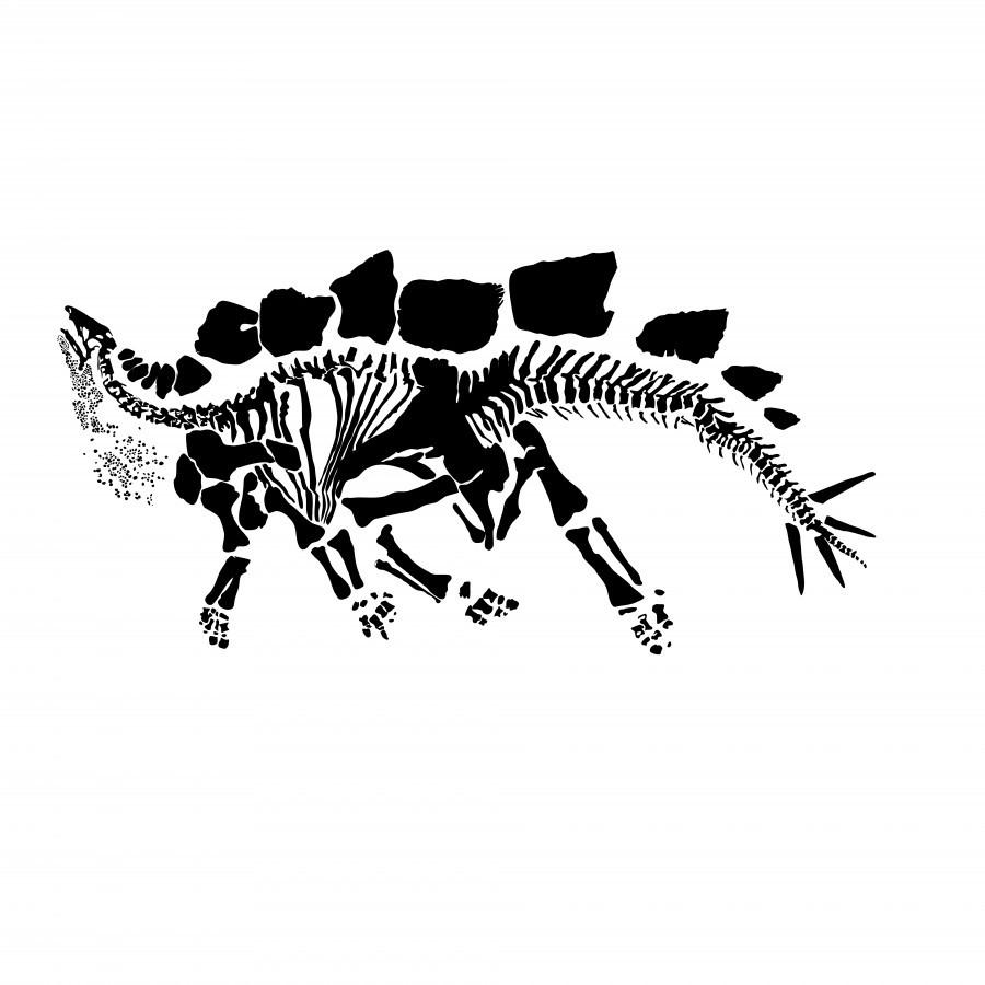 Fossil Stegasaurus  Print