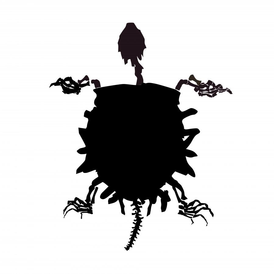 Fossil Turtle  Print