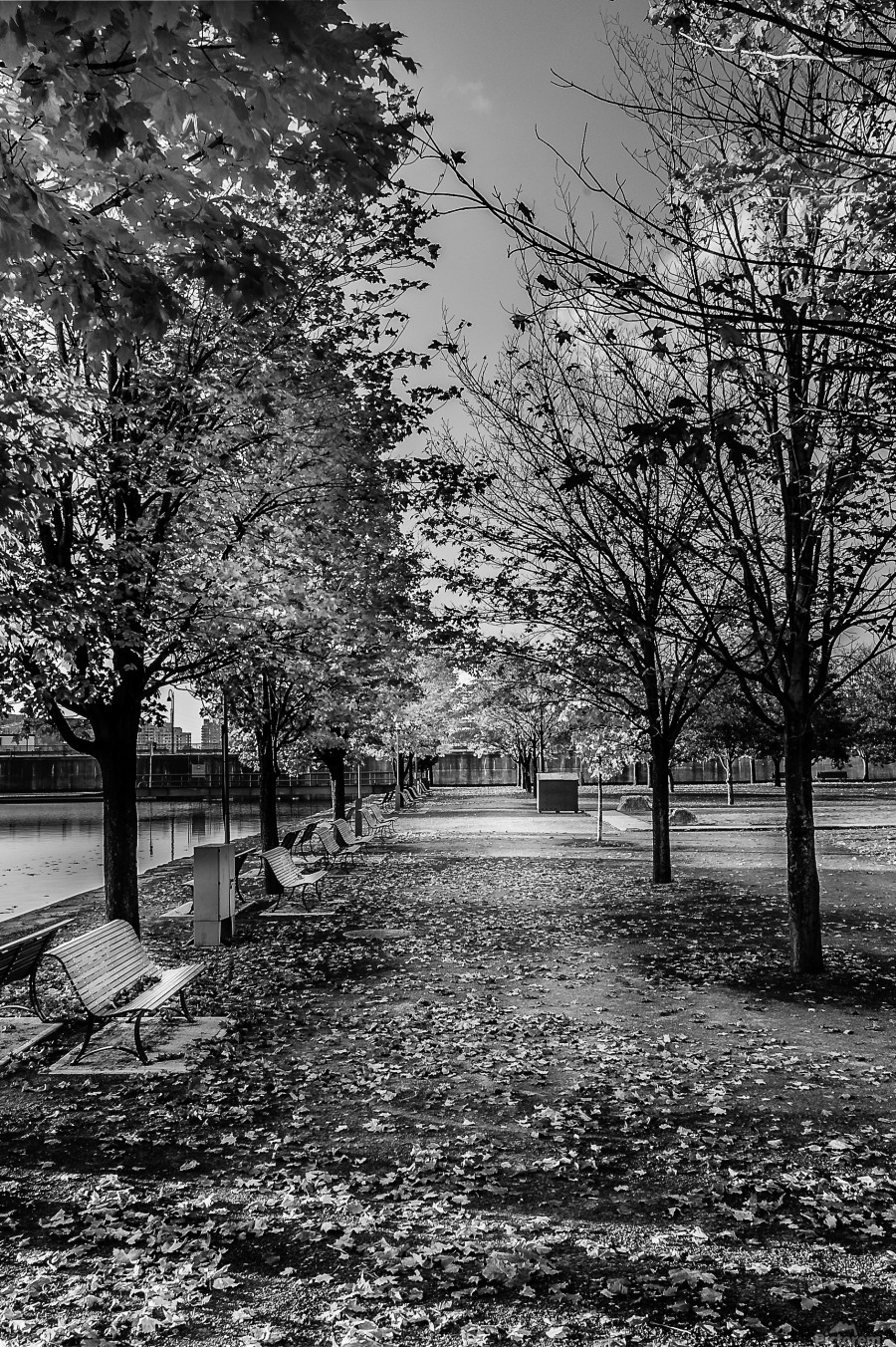 Old Port Of Montreal Autumn B&W  Print