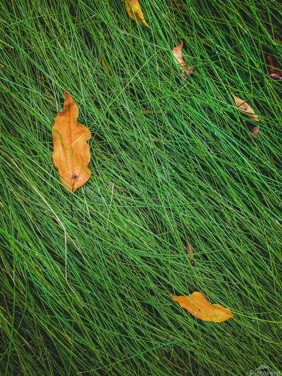 green grass field background with dry brown leaves  Print