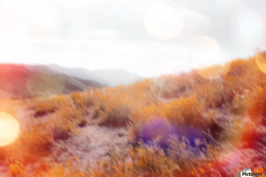 yellow flower field on the mountain with summer light bokeh abstract  Print