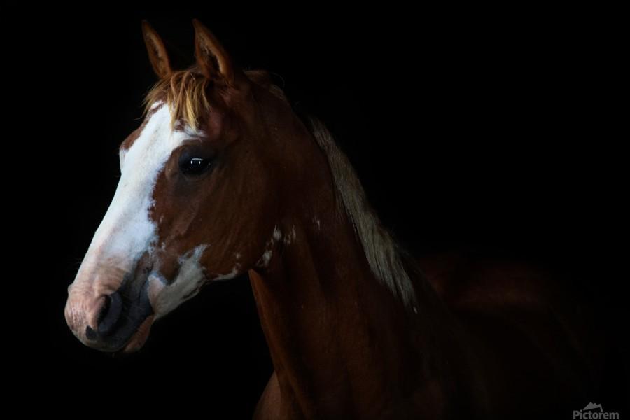 Studio Horses  Print