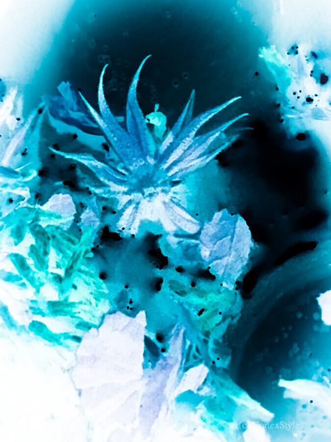 Bleu Bird Ingnite   Imprimer