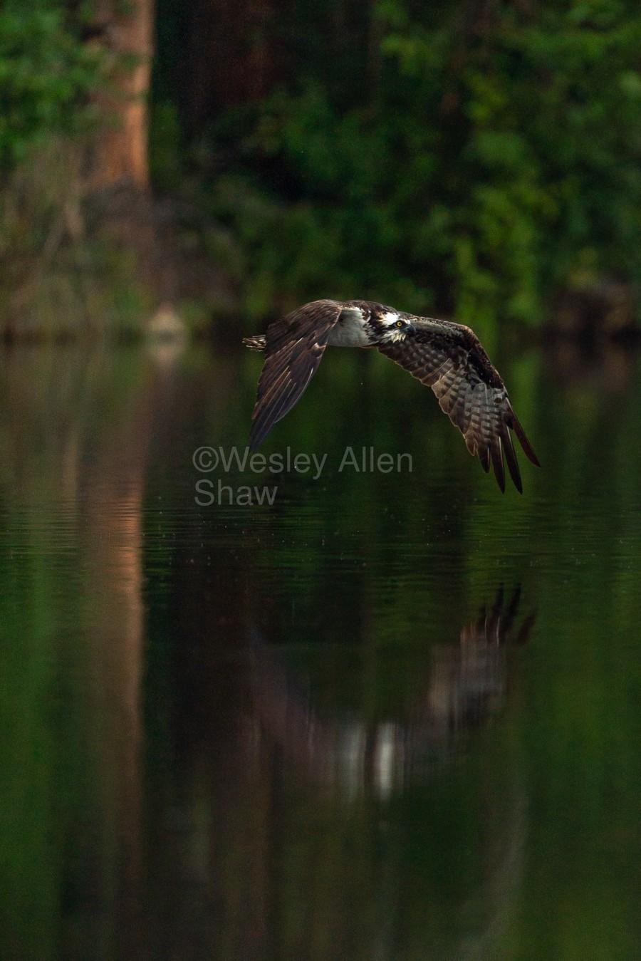 Wesley Allen Shaw 00747  Print