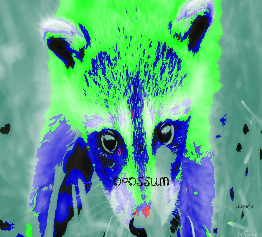 abstract Opossum  Print