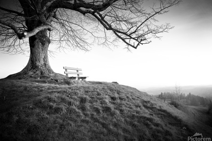 lonely bench under a tree  Print