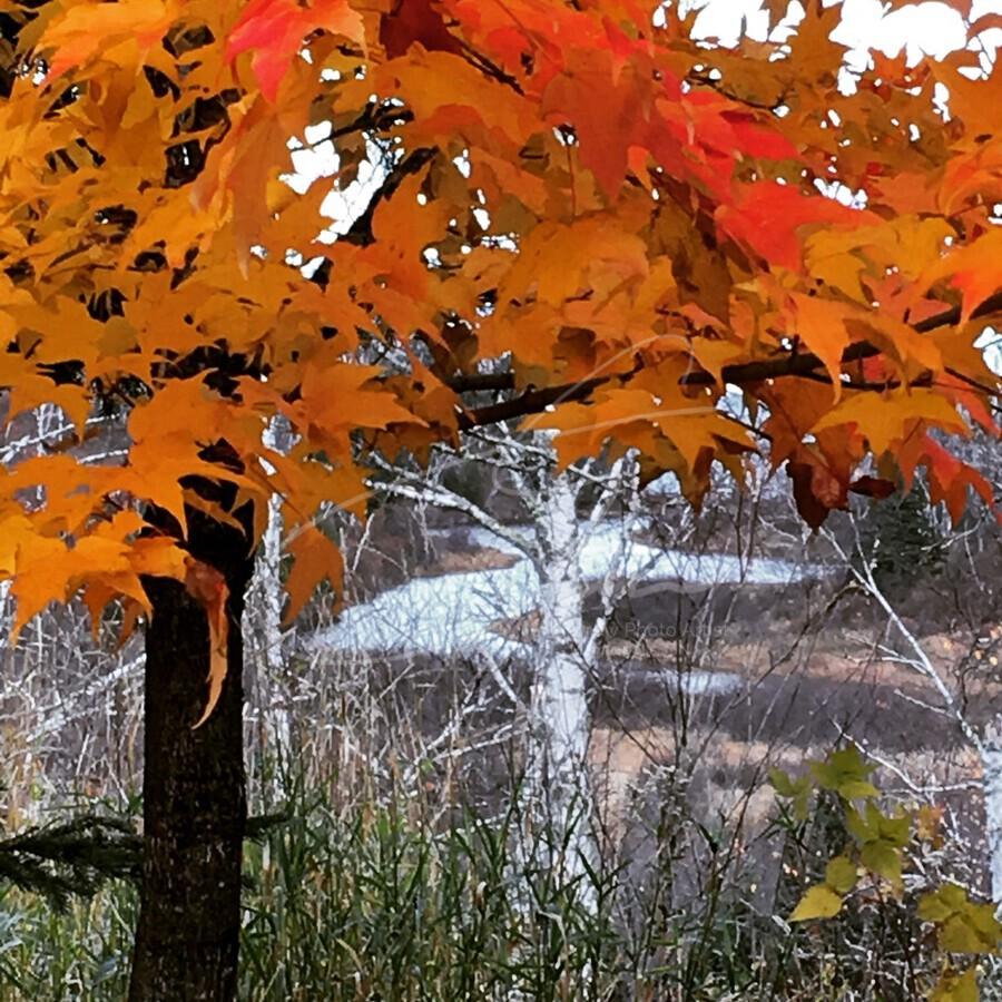 Autumn at Lake Superior  Print