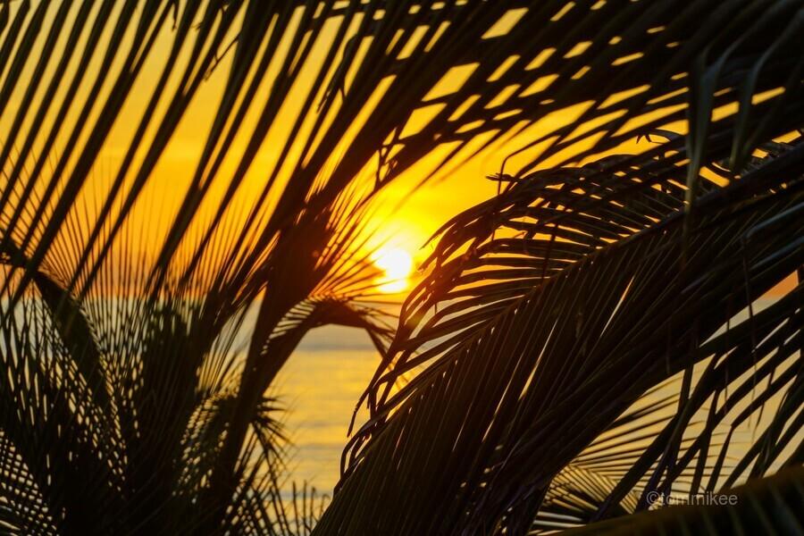 Sunrise through the palms  Print