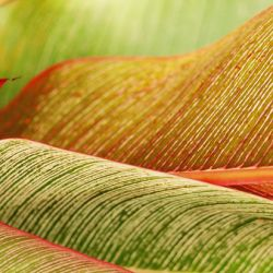 Indonesia, Bali, Close-Up Of Tropical Plants, Leaves