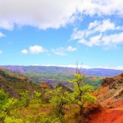 Beautiful View in the Waimea Canyon Area in the Puu Ka Pele Forest Reserve on the Island of Kauai Hawaii