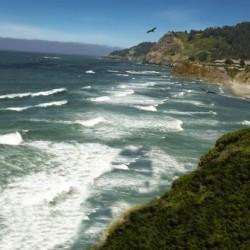Eagles Flying Along the Coast