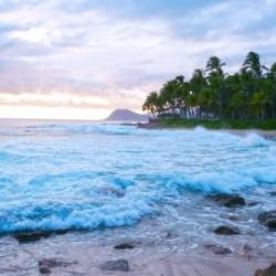 Untamed Hawaii