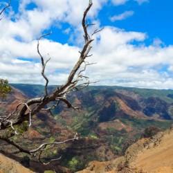 Wild Kauai 2