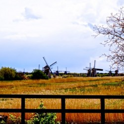 Windmills in Spring