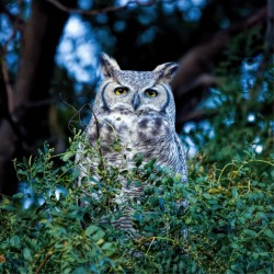 Owls in the Park