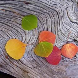 leaves Kenosha