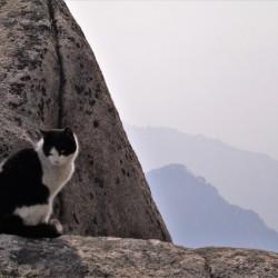 Mountain Cat
