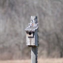 Abandoned Birdhouse