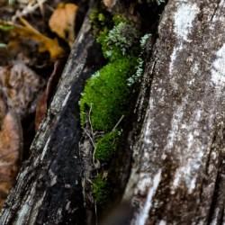 Still Moss
