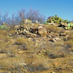 Rock n Cactus