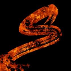 Burning on Fire Letter S
