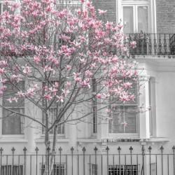 Magnolia tree outside house in London