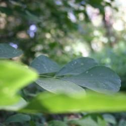 blur leaf