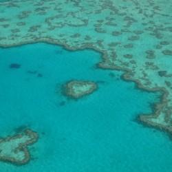 Love Reef