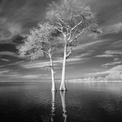 Blue Cypress Lake  All alone