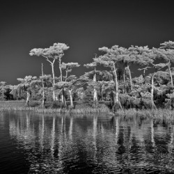 Blue Cypress Lake full moon
