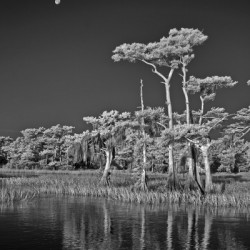 Blue Cypress Lake with full moon vertical