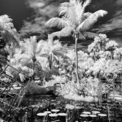 McKee Gardens  Vero Beach  Florida