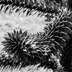Plant Image BW