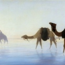 Camels crossing water